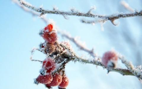 Hvide-vinterbilleder